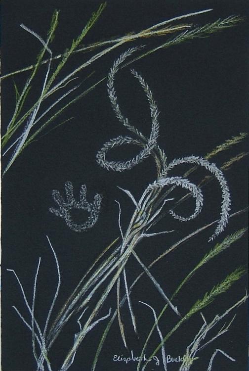 Grasses in Light