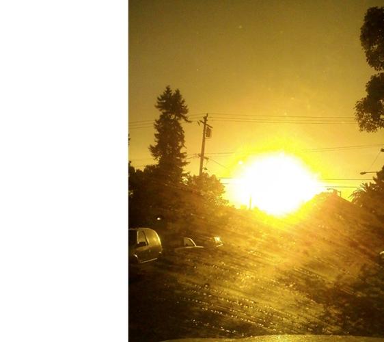 californian gold.jpg
