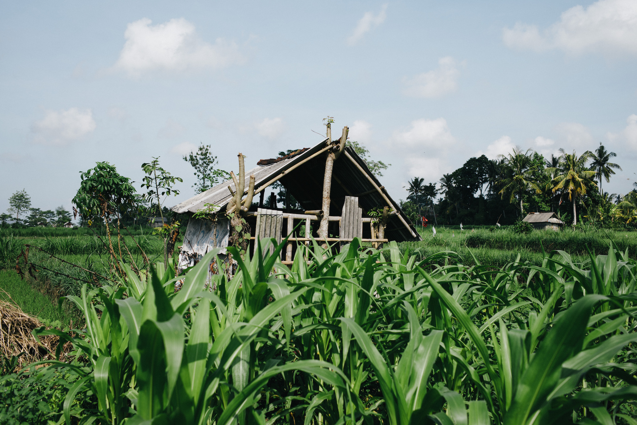 Rice and vegetable fields in Sidemen, Bali. Shot on Leica M Typ 240, Summarit 35mm f/2.5 using VSCO Kodak Portra 160NC processing.