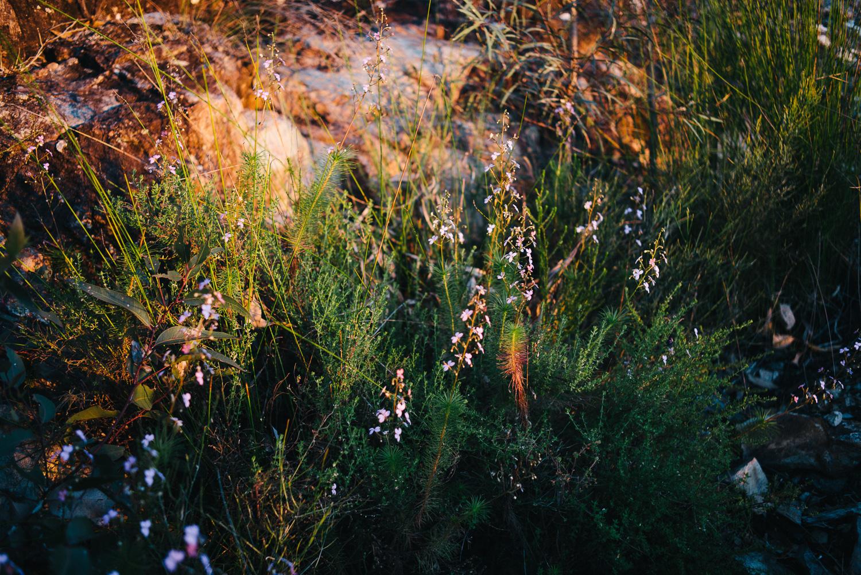 Nick-Bedford-Photographer-20160829_MtGreville_061212-Bushwalking, First Light, Hiking, Leica M Typ 240, Mount Greville, Mountains, Queensland, Summarit 35mm, Sunrise, VSCO Film.jpg