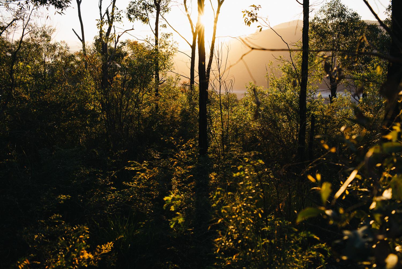 Nick-Bedford-Photographer-20160829_MtGreville_061915-Bushwalking, First Light, Hiking, Leica M Typ 240, Mount Greville, Mountains, Queensland, Summarit 35mm, Sunrise, VSCO Film.jpg