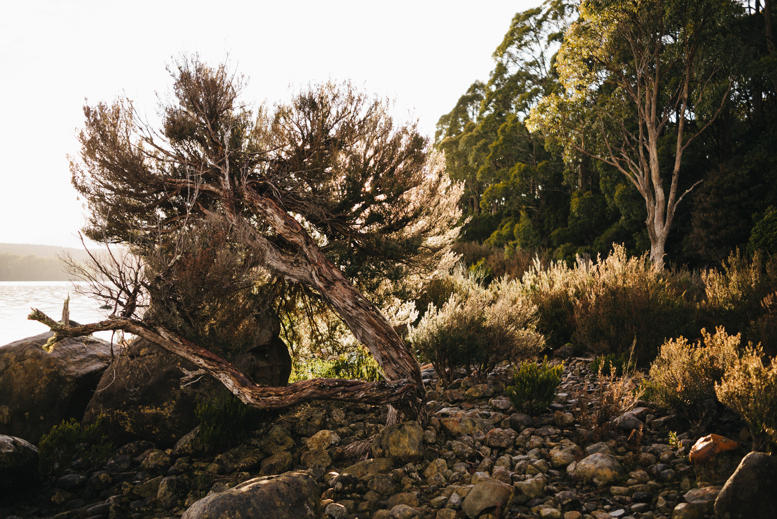 20150907_TasmaniaRoadtrip_074230-Nick-Bedford,-Photographer-Australia, Lake St Claire, Leica M Typ 240, Road Trip, Summarit 35mm, Tasmania, Travel, VSCO Film.jpg