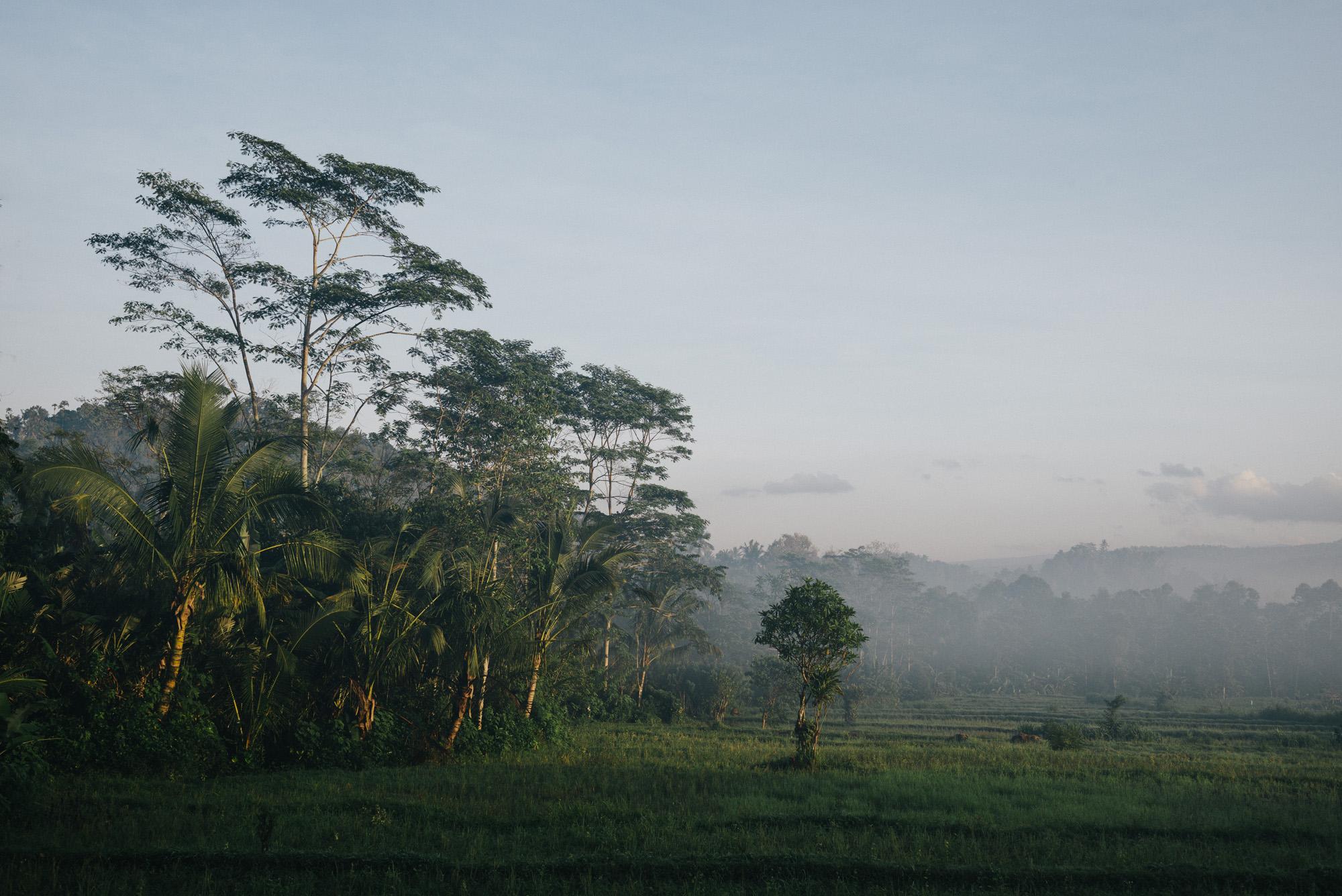 Hazy Morning in Sidemen, Bali