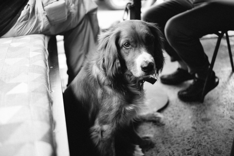 Nick-Bedford-Photographer-20161127_Street_084609-Black and White, Blackstar Coffee, Brisbane, Leica M Typ 240, Summarit 35mm, Summer, VSCO Film, West End Camera Club.jpg
