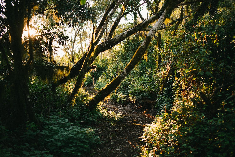 Moss on Mount Mitchell