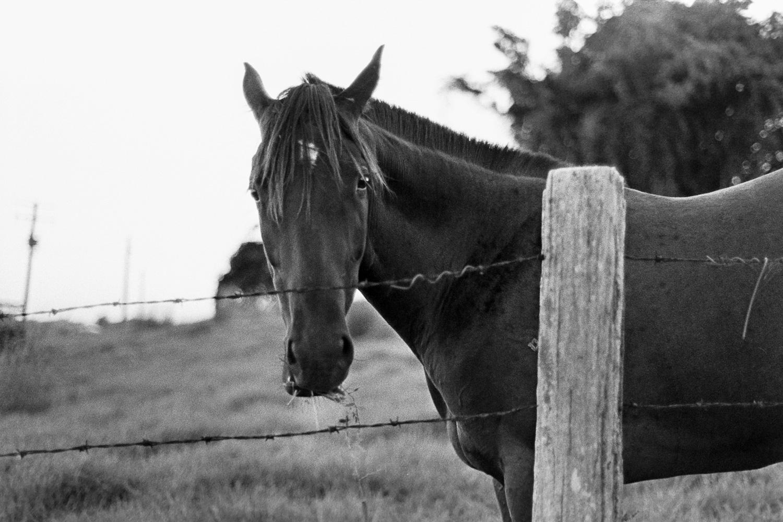 Hello Mr. Horse.