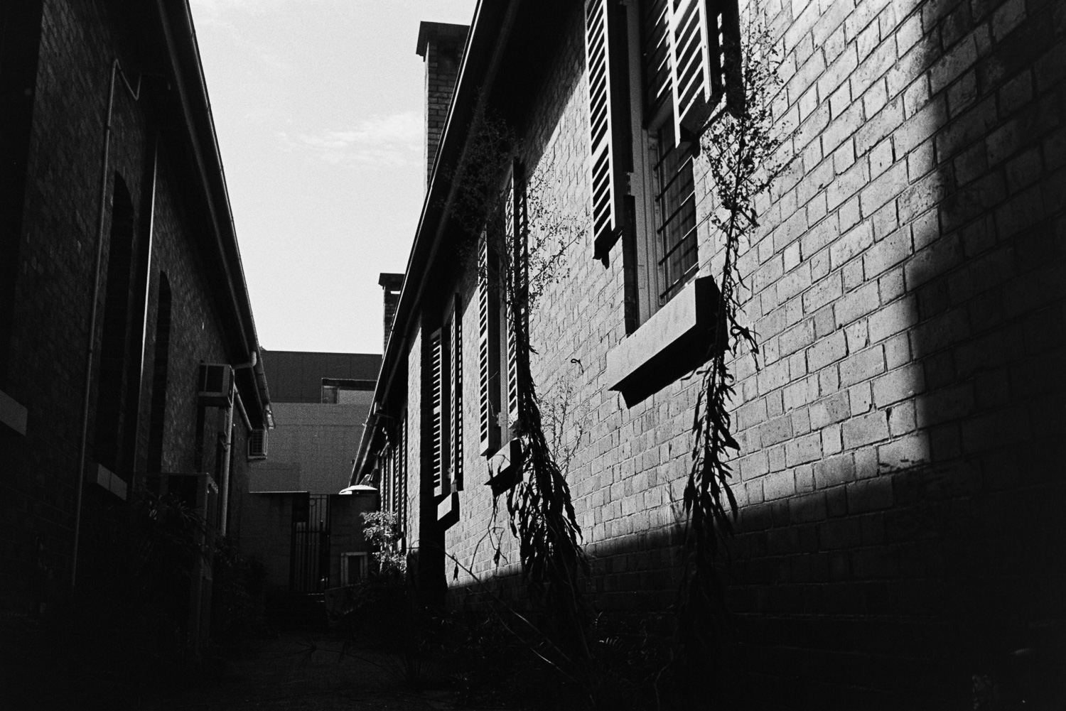 20170326_ROLL_125_023-Nick-Bedford,-Photographer-Black and White, Brisbane, Film, Kodak Tri-X 400, Leica M7, Rodinal, Street Photography.jpg