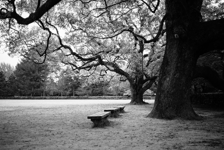 In Kyoto Gyoen park.