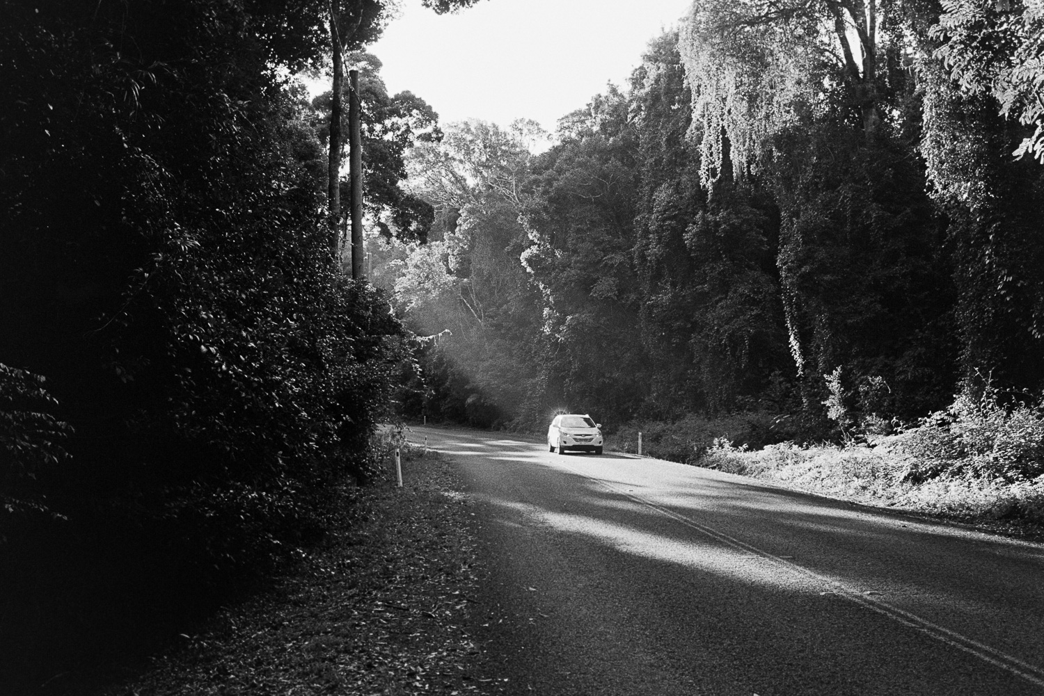Mount Glorious on black and white film...