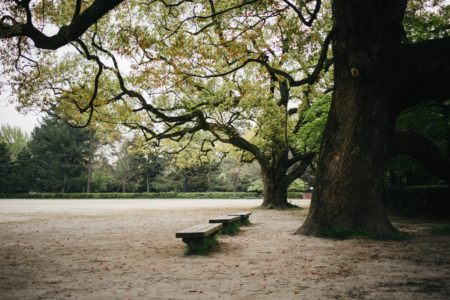 Serenity in a park.