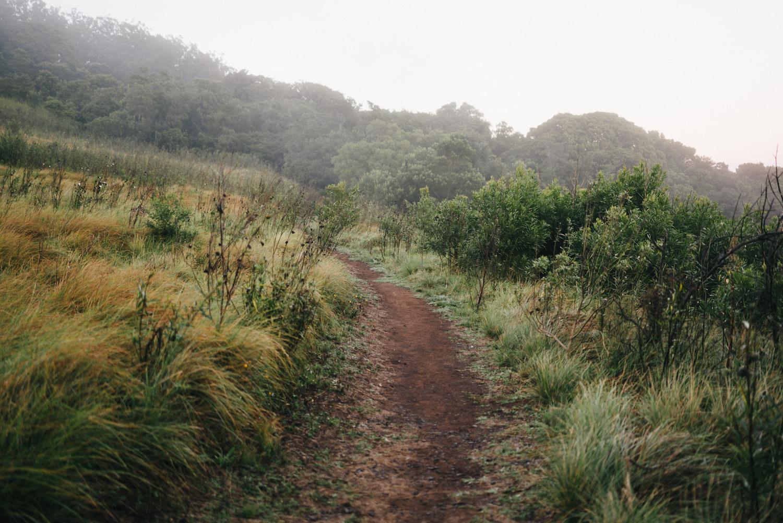 20170527_BunyaMountains_203254-Nick-Bedford,-Photographer-Australia, Bunya Mountains, Camping, Forest, Landscape, Queensland, VSCO Film, Winter.jpg