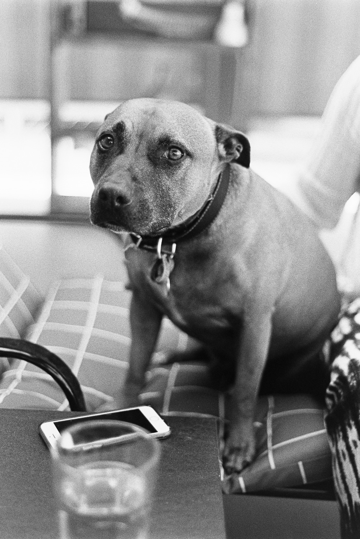 20170903 - Roll 153 - 027-Nick-Bedford,-Photographer-Black and White, Film, Kodak Tri-X 400, Nikkor 50mm F1.8 AI-s, Nikon FA, Portrait.jpg