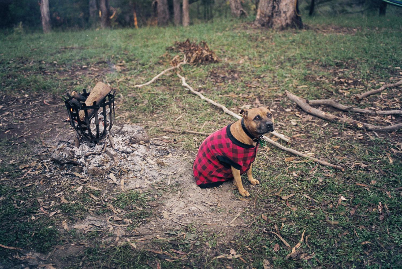 Camp dog, Rocky.