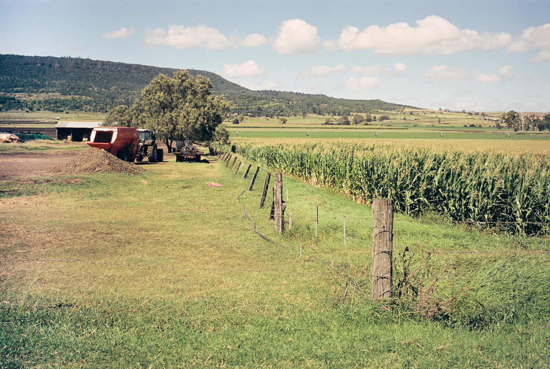 Cane and corn and farm stuff.