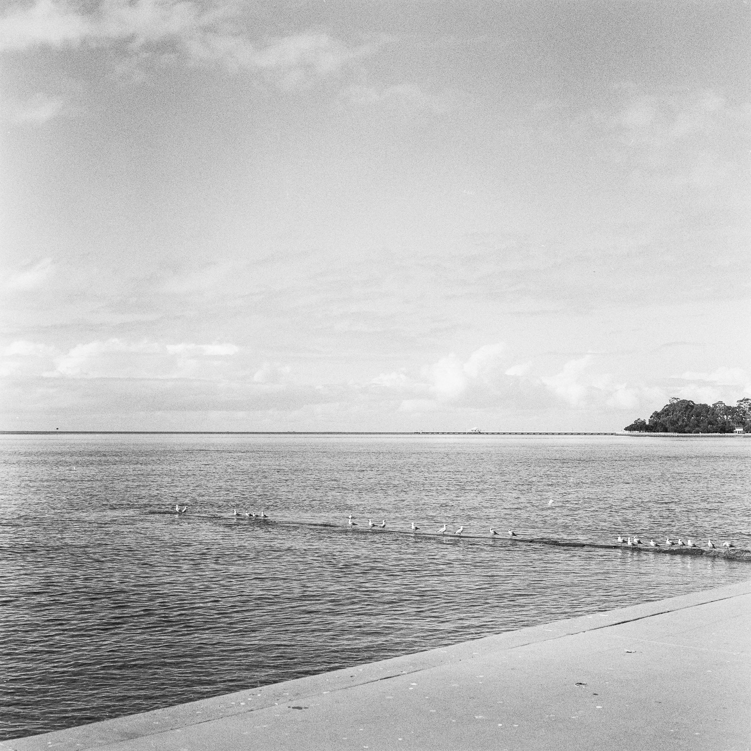 Shorncliffe Pier on the horizon.