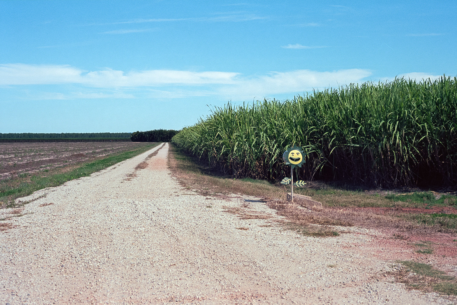 Cane fields are something else.