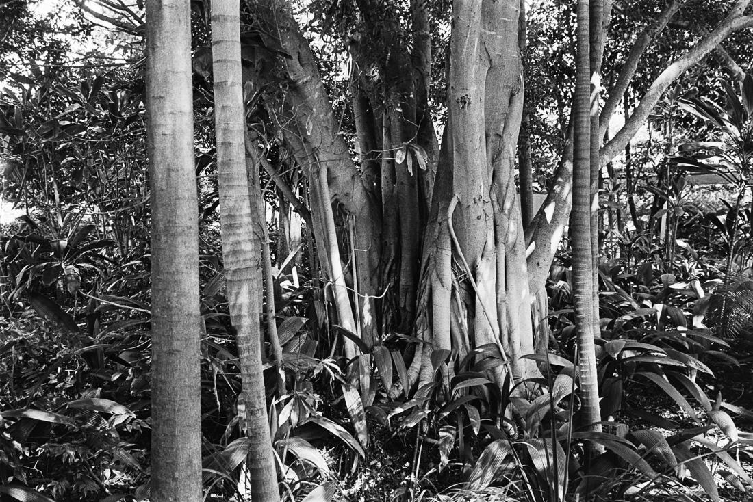 Jungles of Brisbane.