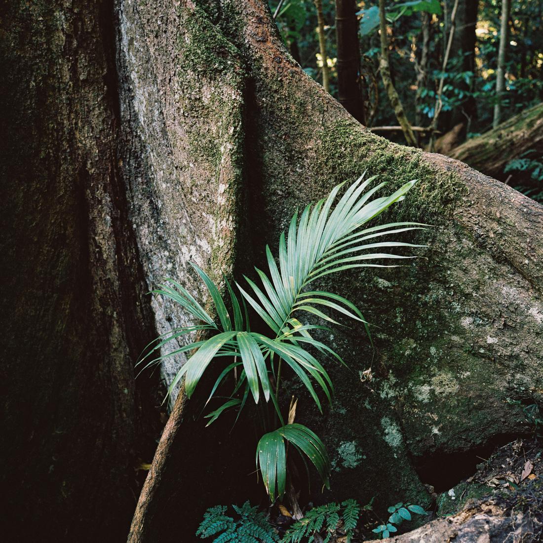 Rainforest on Mount Mitchell.