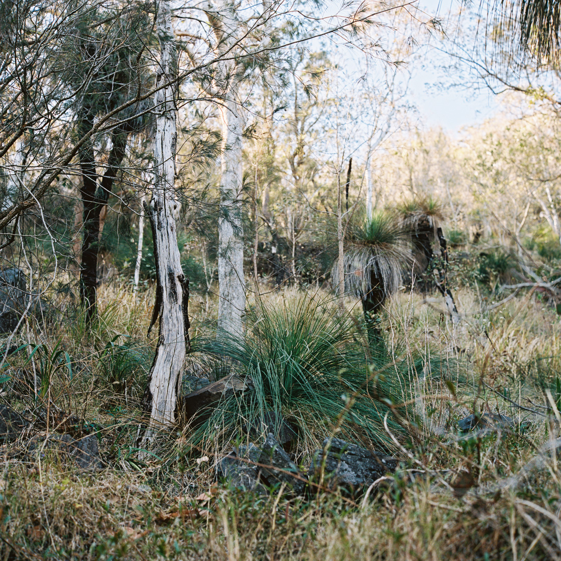 Grass and gum trees.