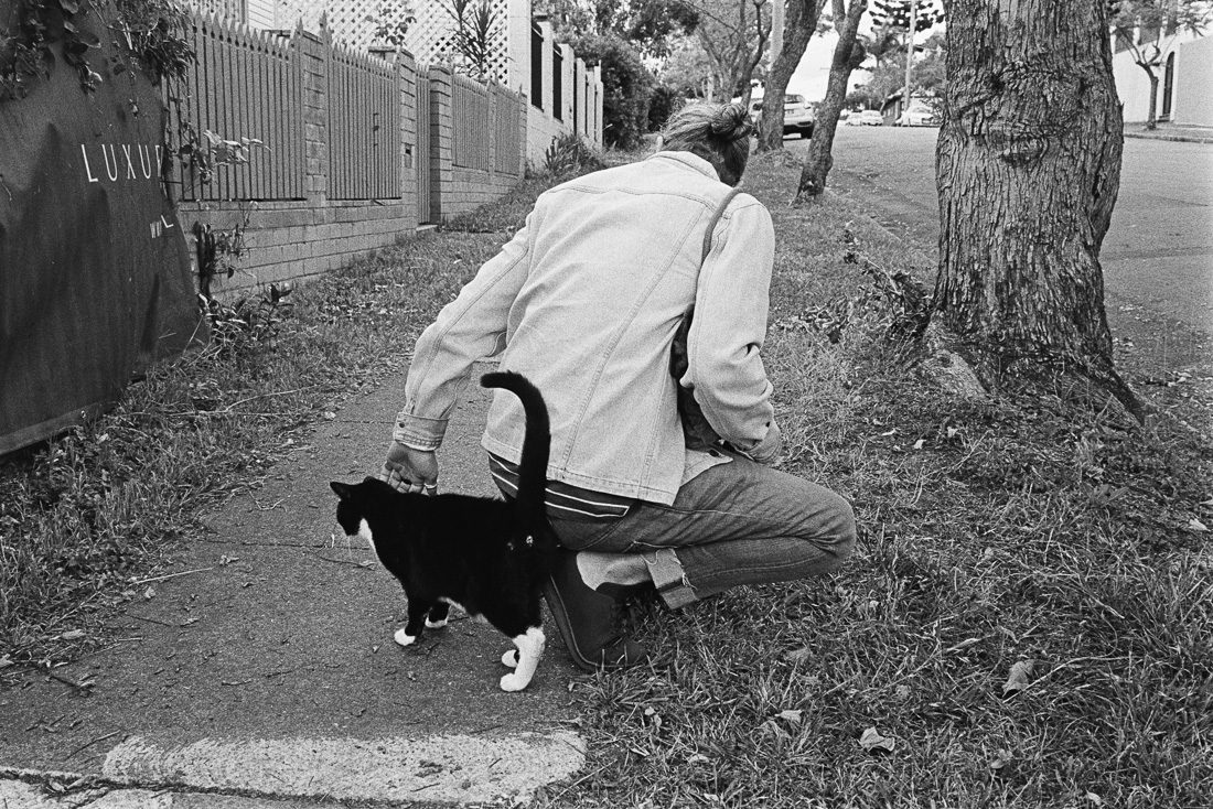 Simon and a cat