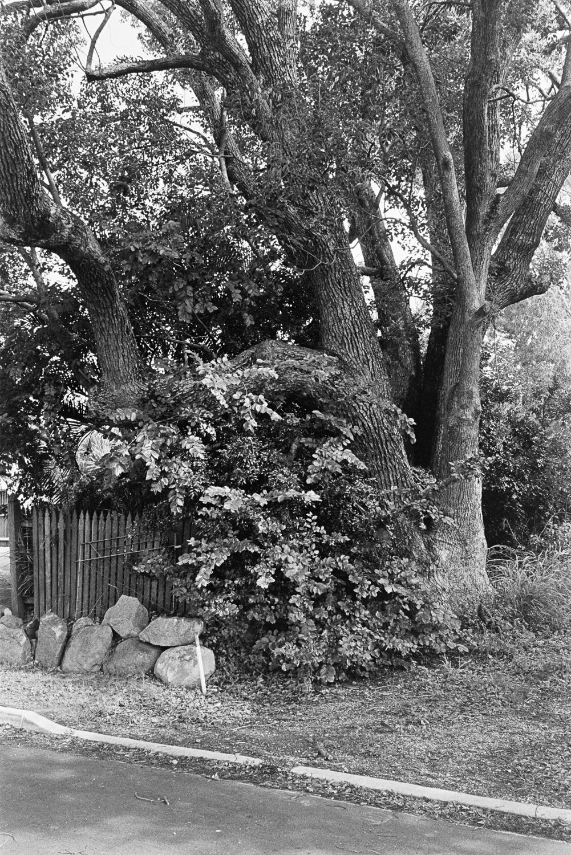 20190105 - Roll 269 - 014-Nick-Bedford,-Photographer-Black and White, Brisbane, Kodak TRI-X 400, Leica M7, Street Photography, Voigtlander 35mm F1.7.jpg