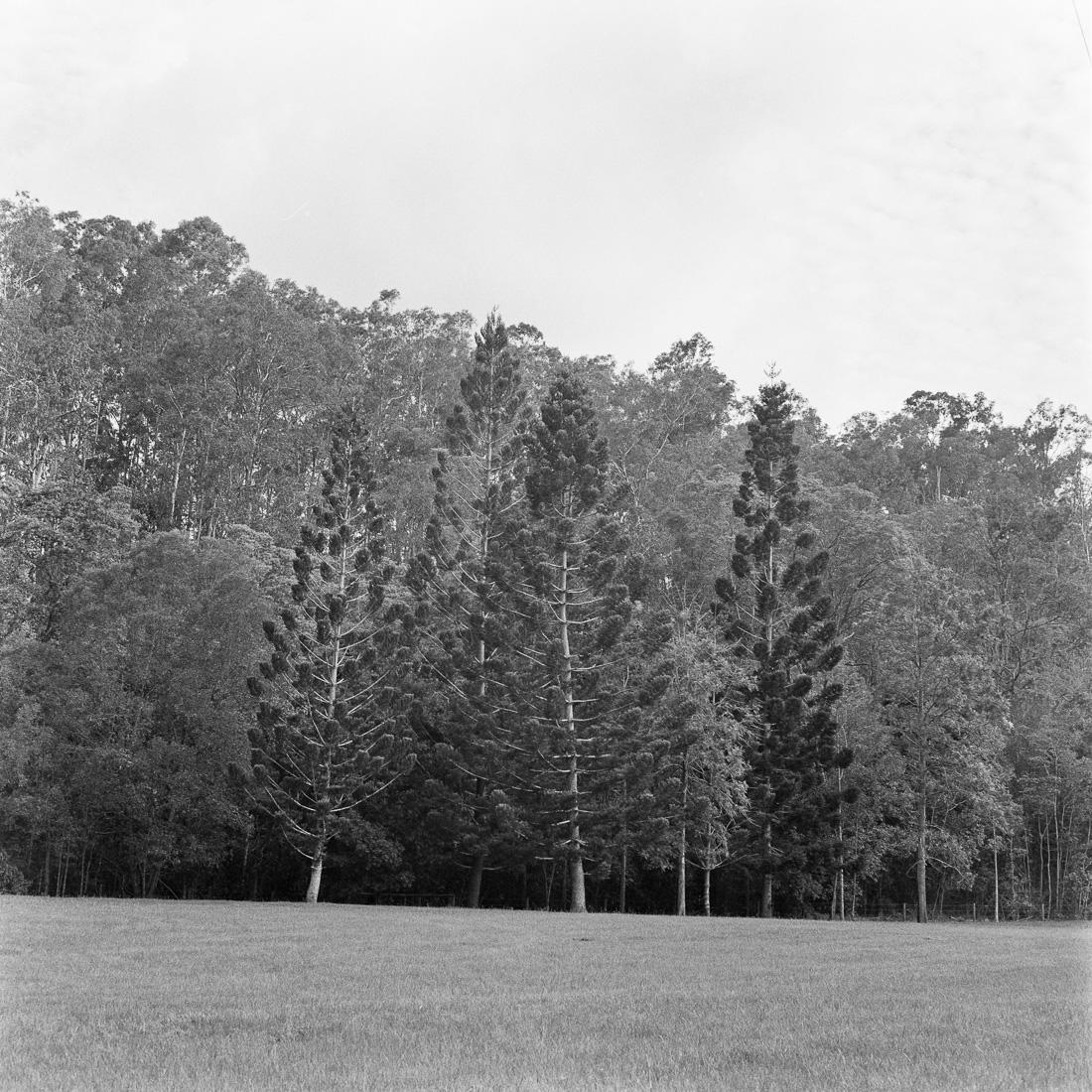20190112 - Roll 270 - 003-Nick-Bedford,-Photographer-80mm F2.8, Black and White, Brisbane, Ilford HP5+, Medium Format, Rolleiflex 2.8D.jpg