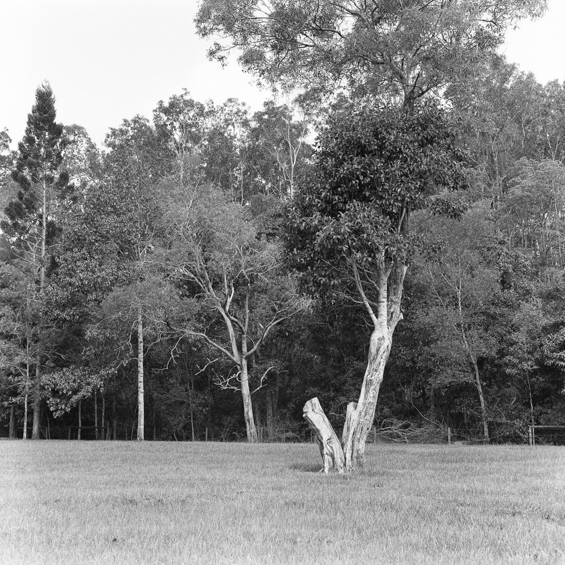 20190112 - Roll 270 - 004-Nick-Bedford,-Photographer-80mm F2.8, Black and White, Brisbane, Ilford HP5+, Medium Format, Rolleiflex 2.8D.jpg