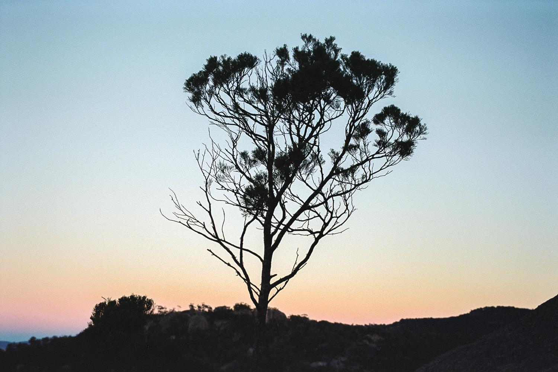 20180521+-+Roll+187+-+015-Nick-Bedford,-Photographer-Camping,+Girraween+National+Park,+Kodak+Portra+160,+Landscape+Photography,+Leica+M7,+Queensland,+Voigtlander+35mm+F1.7+Ultron+Asph.jpg