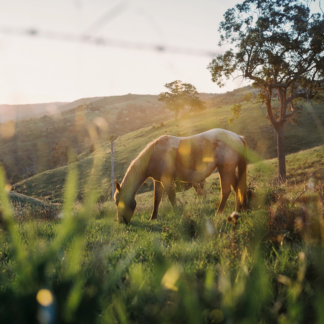 A horse up north west of Brisbane.