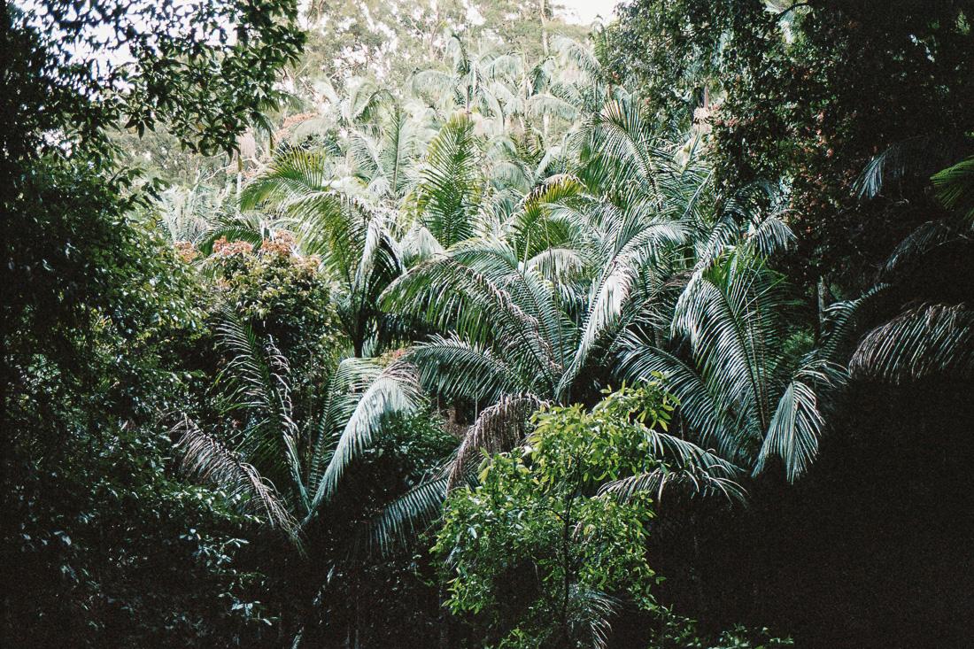 The rainforest on Mount Barney.