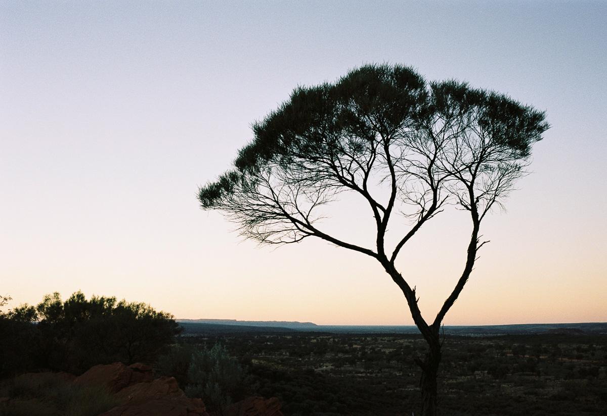 This camping tree at dawn.