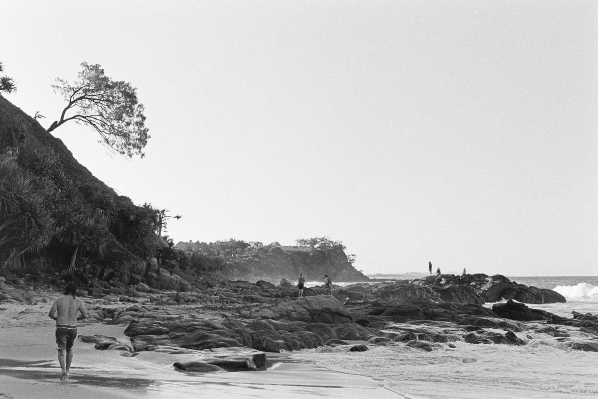 Beautiful beach, curious tree.