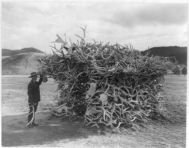 A ranger standing by a hut made of deer, elk, & moose antlers...probably Yellowstone National Park, photo by J.E. Haynes