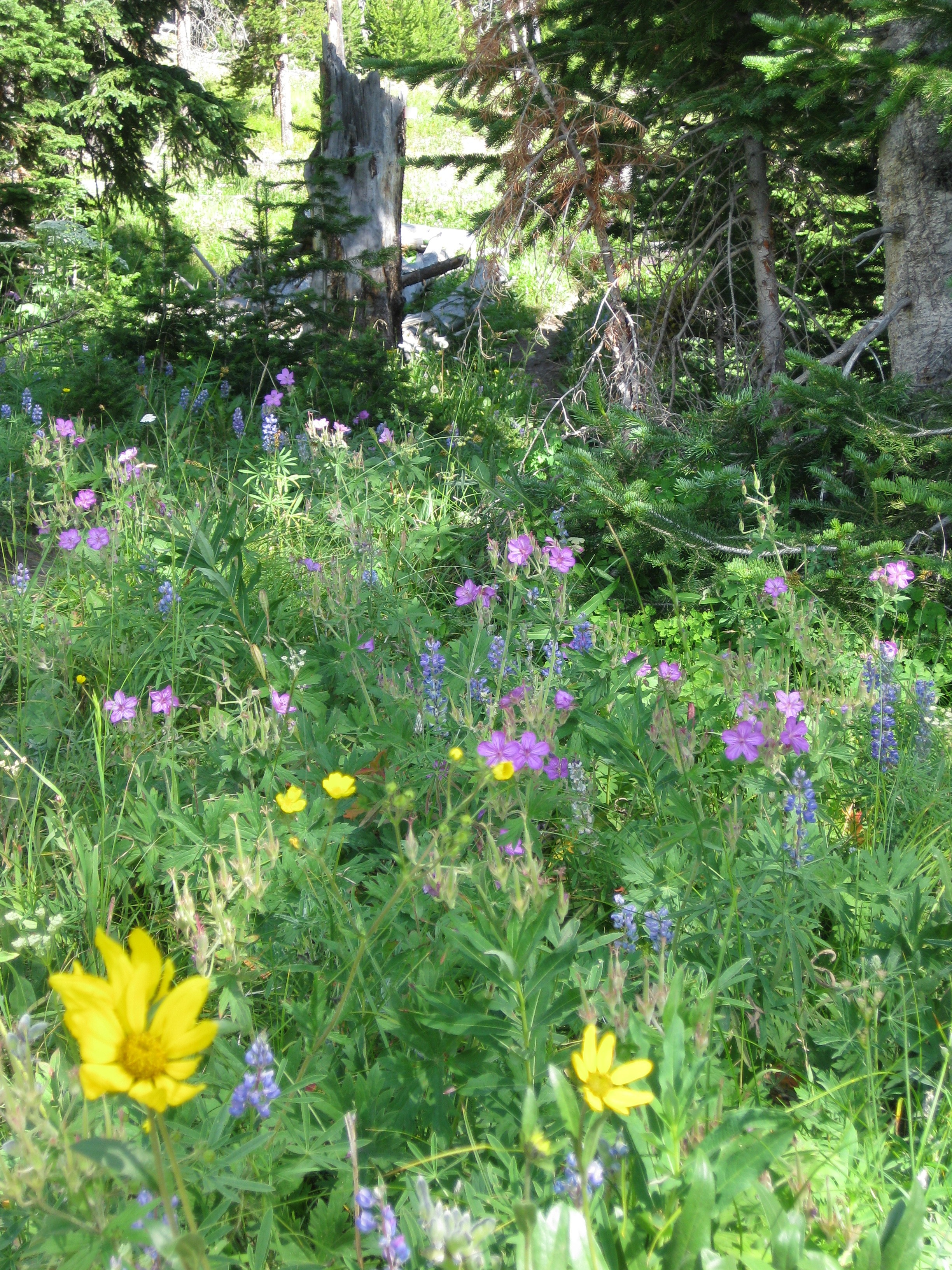 Wildflowers along the way