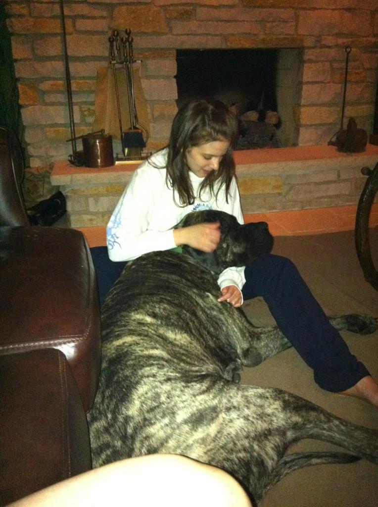 He thinks he's a lap dog
