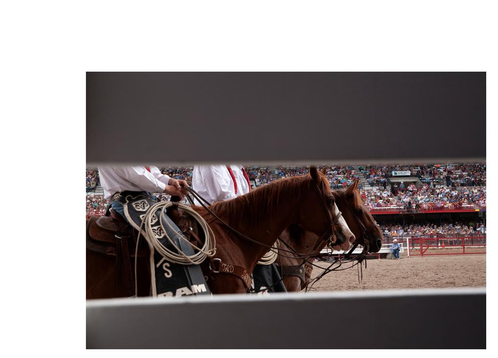 SaddleUp.jpg