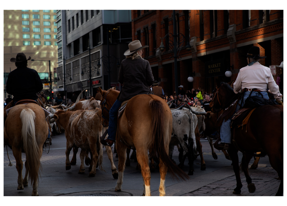 National Western Stock Show kicks off with a parade in downtown Denver