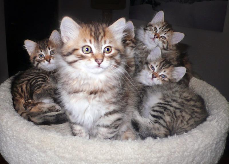 Dina's-kittens-12-30-11-1.jpg