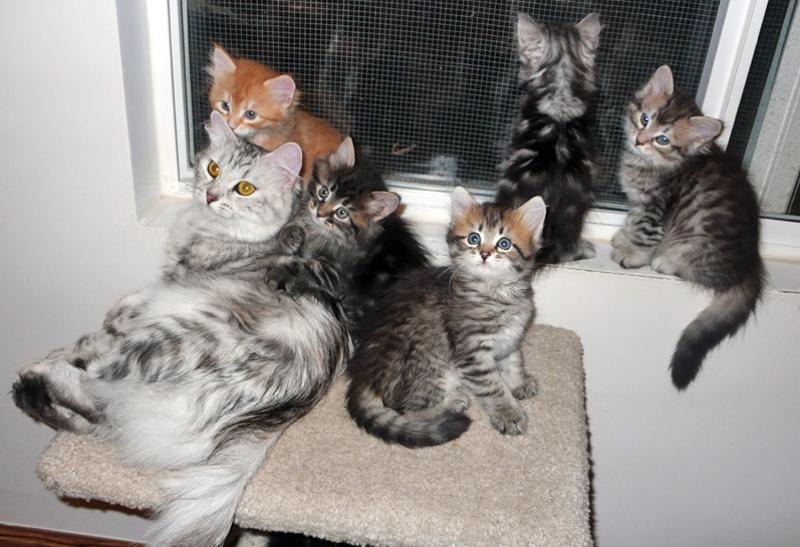 Zosya-babies-06-09-14-5.jpg