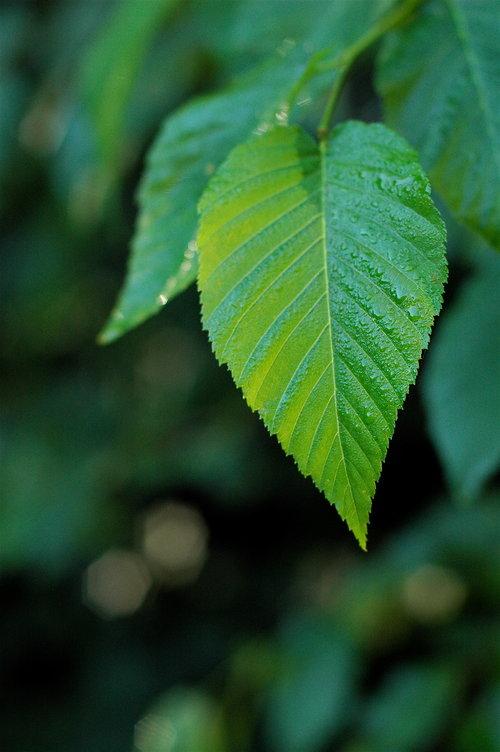 Copy of 03 Glistening Greens
