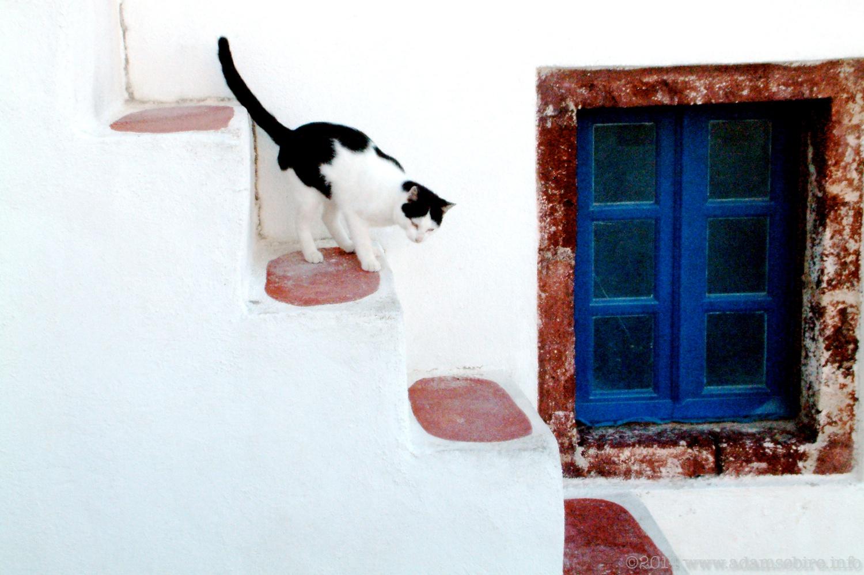 Cat of Oía, Santorini Island, Greece