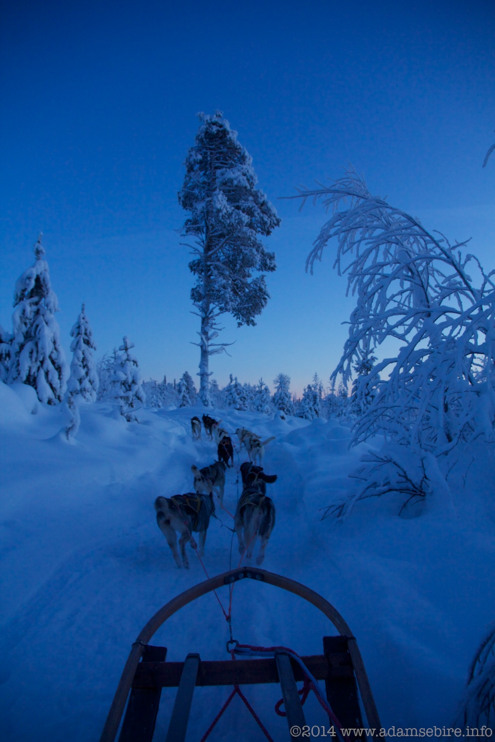 Dog Sledding, Årrenjarka, Swedish Lapland