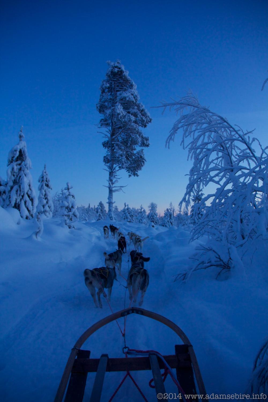 Dog Sledding, Årrenjarka, Swedish Lapland