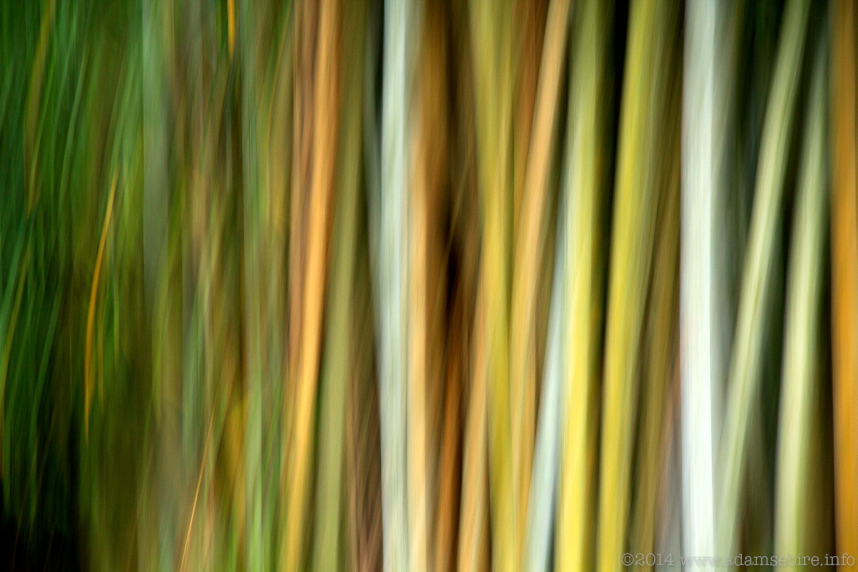 Bamboo, La Reunion Island