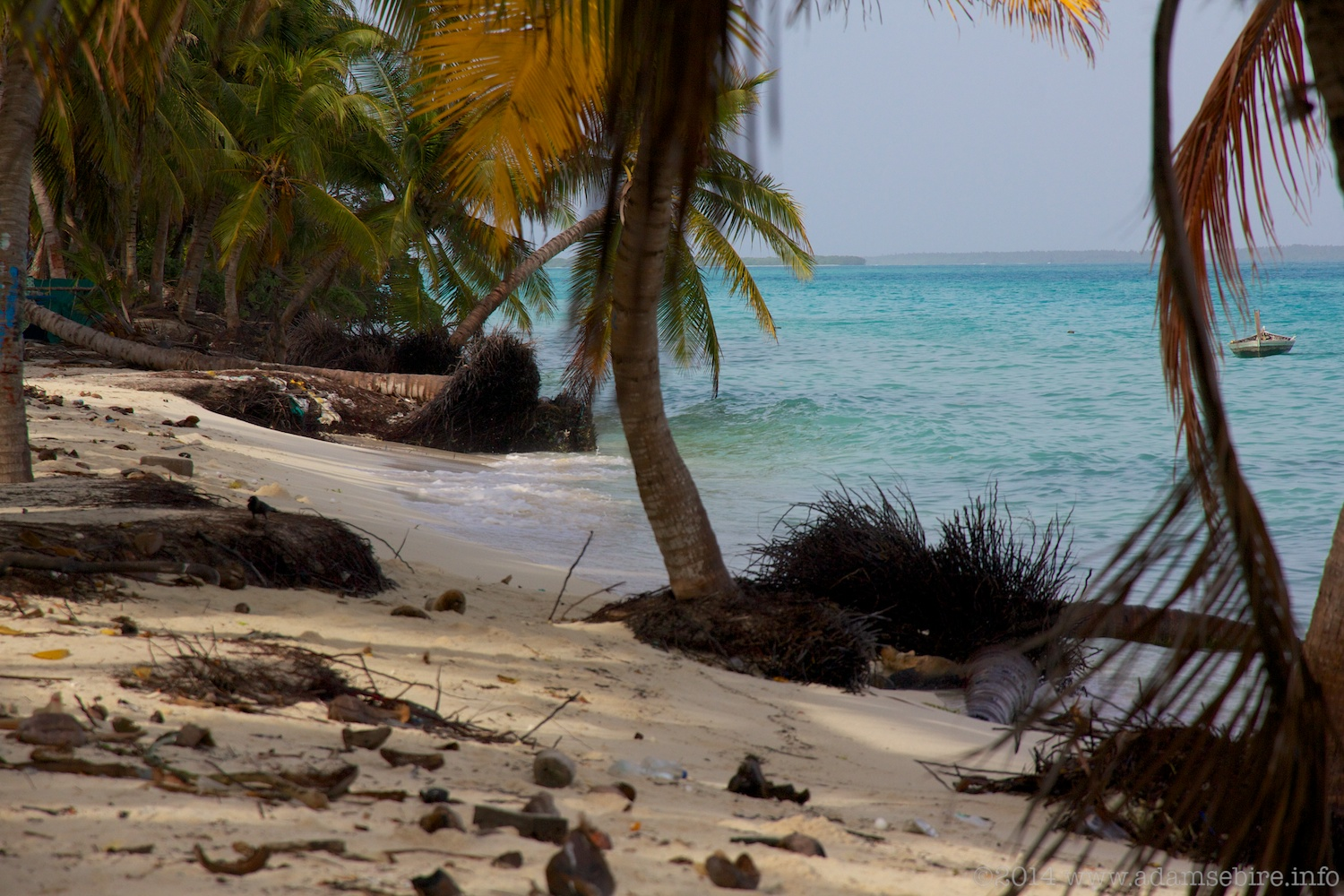 Maldives island erosion; palm trees disappear into the ocean