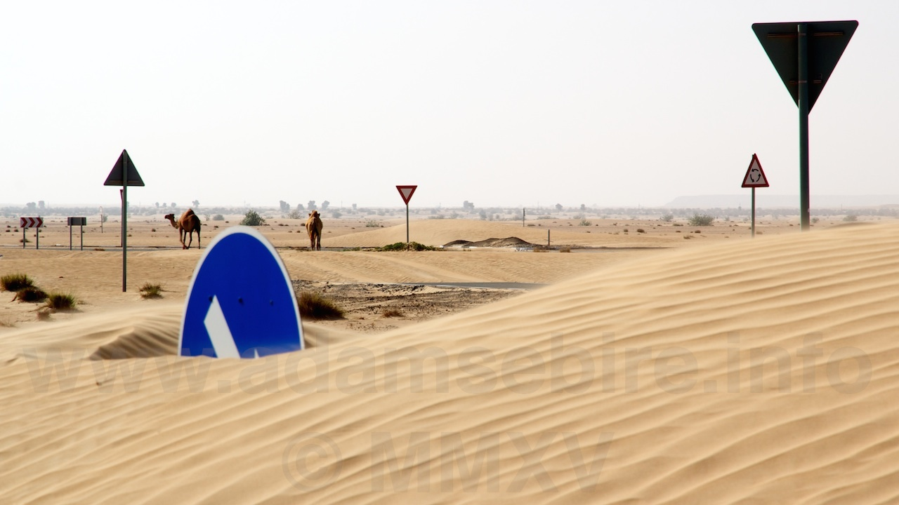 Shot from  Camel Roundabout  (2012). Click image to view video.