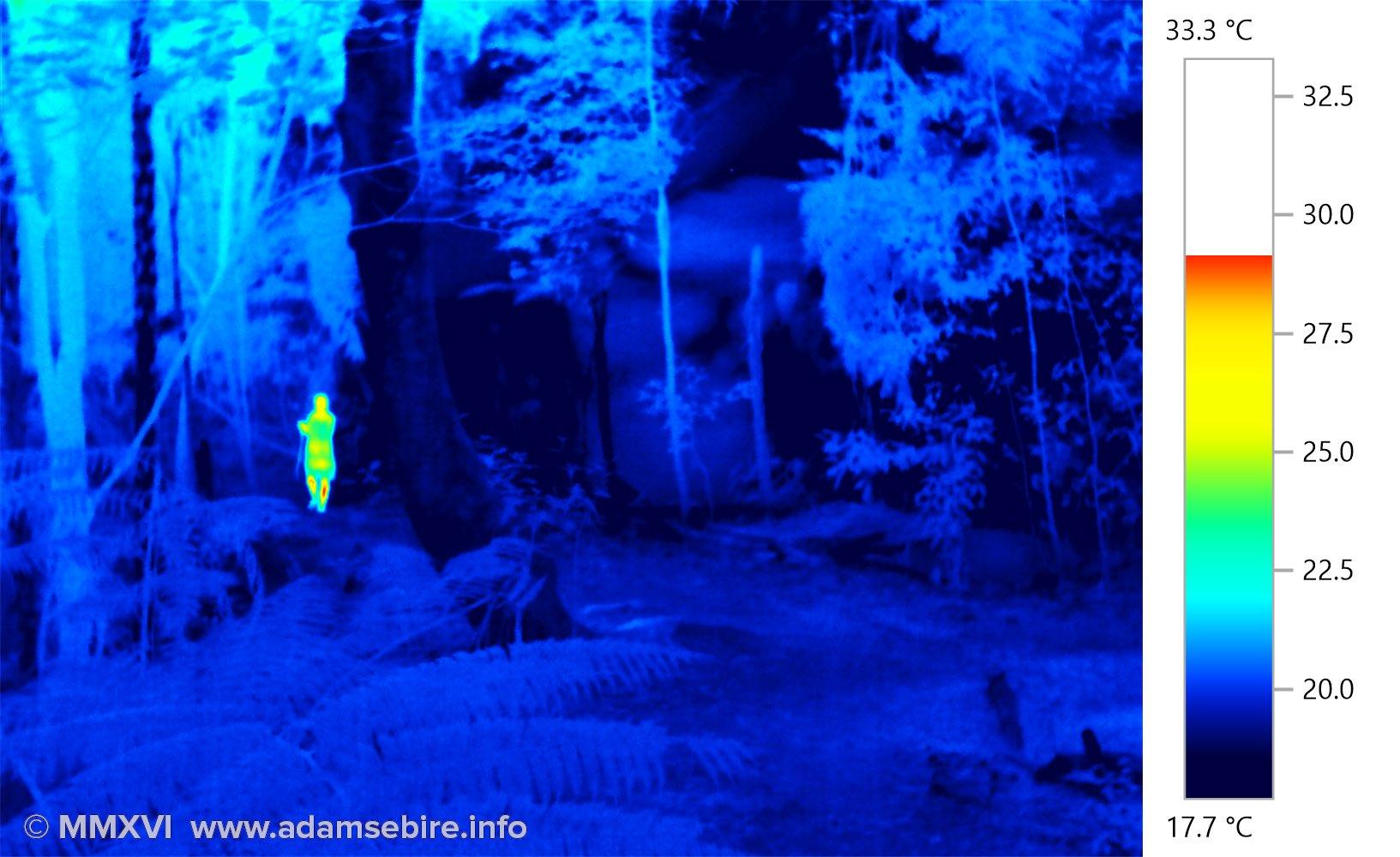 Cool forest (heat sensing camera IR001568)