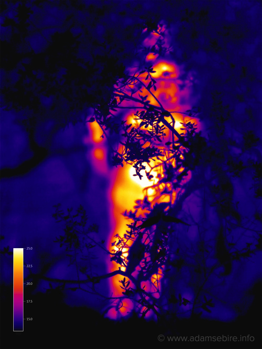 in the heat of the moment - Thermographic stills & video art (using infra-red thermal imaging) created with scientific instruments borrowed from climate change researchers. (2015-ongoing).More →