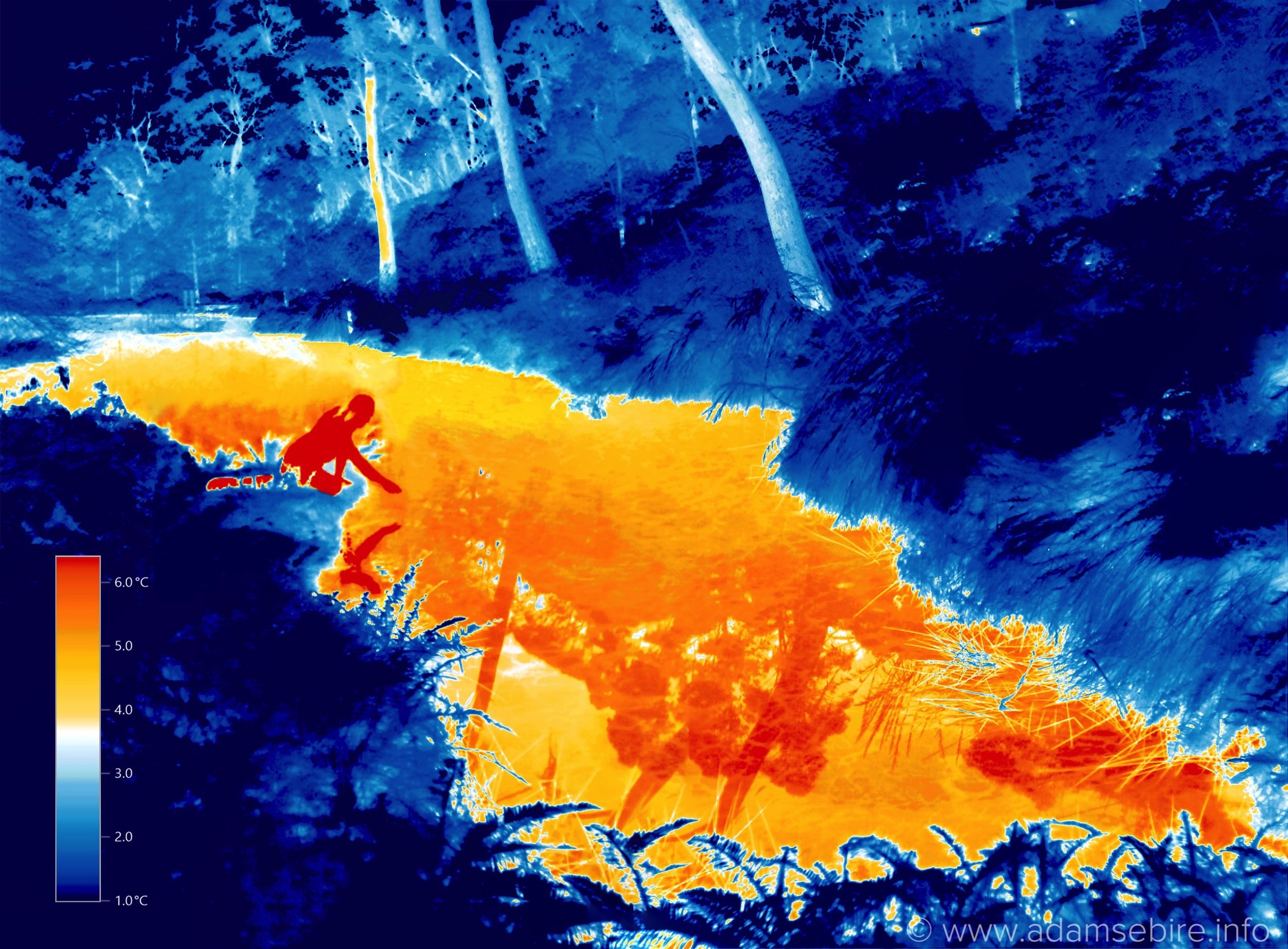 Thermographic Narcissus IR00662-665