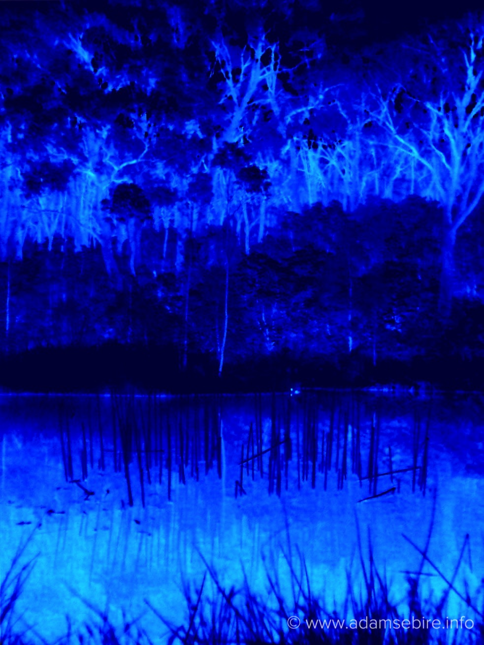Infrared thermal imaging of the natural world - IR00418